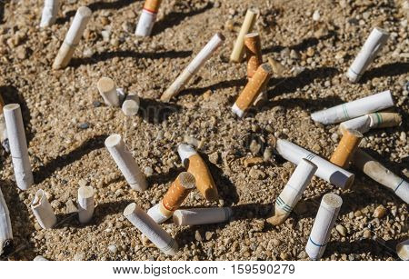Cigarette butts discarded on sand in ashtray.
