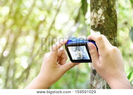 Boy's hand holding compact camera to take a photo. Young traveler man using digital camera outdoor take a picture. Focus on hand holding camera capture texture of tree. Copy space.