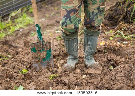 Man digging with spade in autumn or spring garden