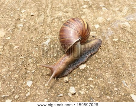 Snail on a concrete floor, snails as not animal bones.