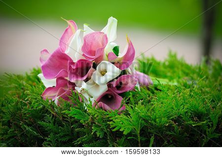 wedding bouquet of white and purple flowers Calla lilies on a green background
