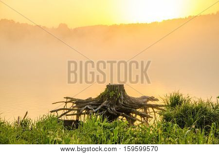 with powerful roots of a tree. tree with strong roots in water. strong roots from the cut tree . misty morning on the lake . the roots of the tree look like a monster.