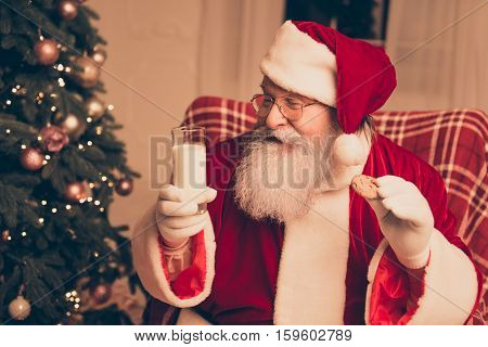 Glad Santa Claus Sitting On Chair In Living Room Near Christmas Tree And Holding Chocolate Cookie An