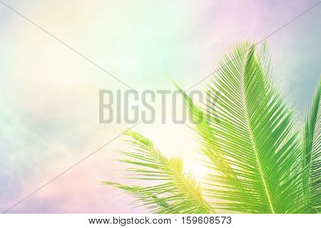 Selective focus on palm tree leaves over peaceful tropical beach background, blue sea landscape, natural abstract card