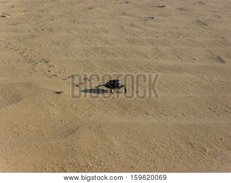 <SAMSUNG DIGITAL CAMERA> Kalmykia, 2010, sand in prarie