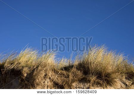 Dunes at the Danish North Sea coast on the beach of Skallingen Esbjerg.