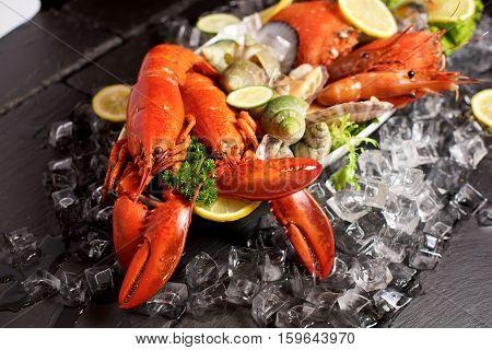 Seafood Lobster Plater On Slate