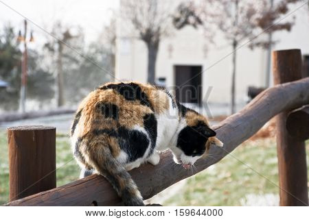 The cuddly cat climbed on the wooden fence