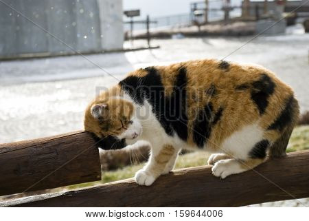 The cuddly cat climbed on the wooden fence.