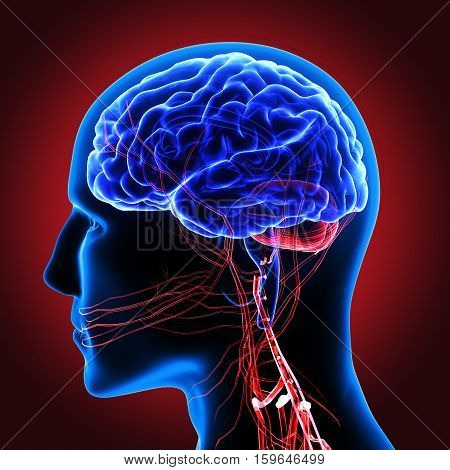 3d illustration human body brain .human body part.