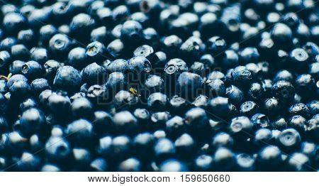 Fresh bilberry background photo, with selective focus