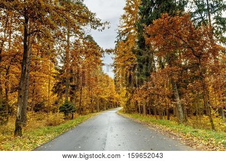 Lithuanian forest beauty of early autumn time