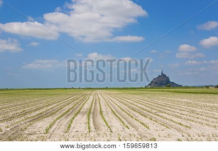 Cultivated firled and Mont Saint-Michel rocky tidal island in Normandy France