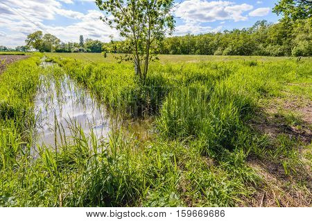 Backlit image of a small stream with reed plants in a Dutch polder landscape on a sunny day in the spring season.