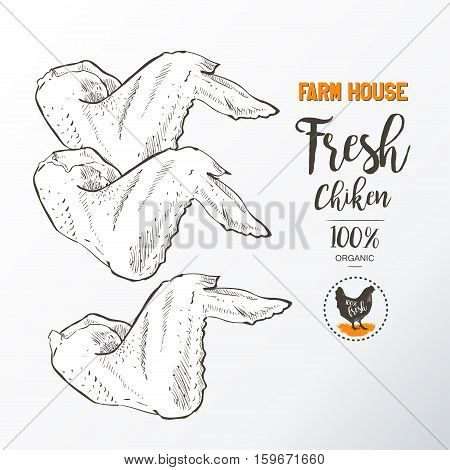 Fresh chicken wings. Top view. Isolated on a white vintage vector isolated sketch hand drown