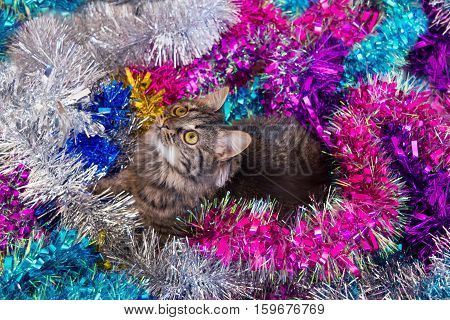 Pretty Cat Sitting On The Tinsel.