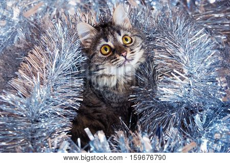 Сat Looking Up In The Tinsel.