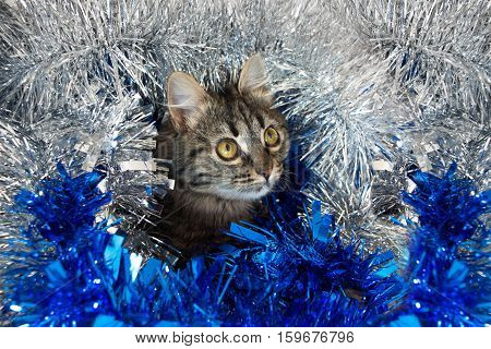 Striped Cat In The Tinsel.