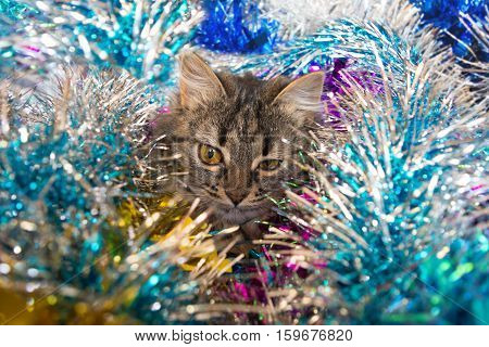 Winking Cat In The Tinsel.