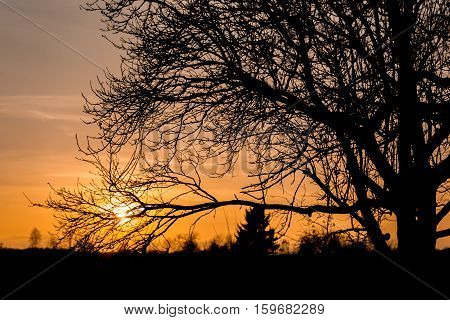 Thin branches in front of warm sunset
