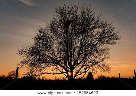Single tree in front of warm orange sunset