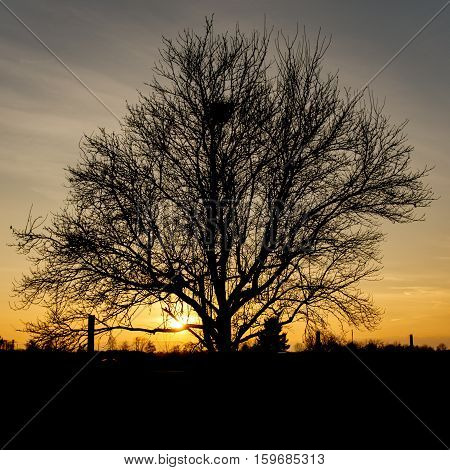 Single tree in front of warm orange sunset - square
