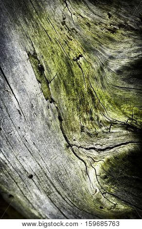 abstract background detail of an old stump overgrown with moss