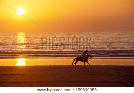 Galloping Horse And Rider At Sunset On Sand Beach