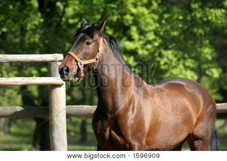 Beautiful horse playing in the park.Outdoor lighting poster