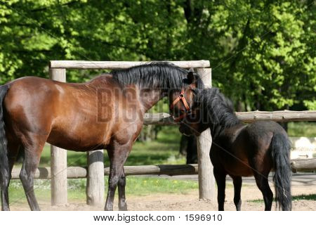 Horses Playing In The Park.