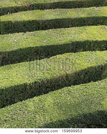 Details Of Thick Hedges Of A Maze Of A Garden