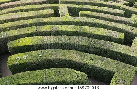 Aerial View Of A Maze Of Hedges