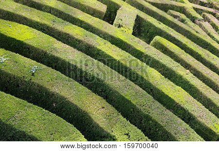 intricate and complex maze of hedges green