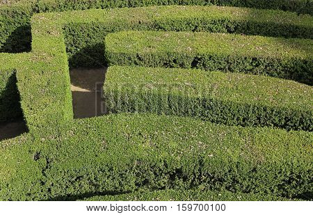 Details Of Thick Hedges Of A Difficult Maze