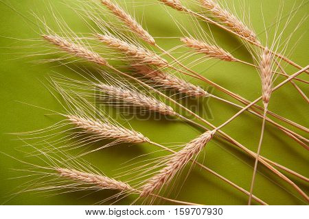 background with group of wheat spica on green