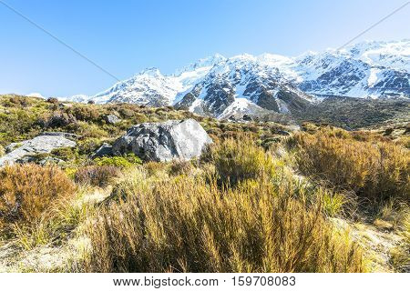 Dry Weed Grass on Aoraki Mount Cook National Park Canterbury region South Island New Zealand.