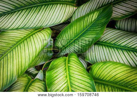 Green leaf texture pattern leaves on dark and light tone for background