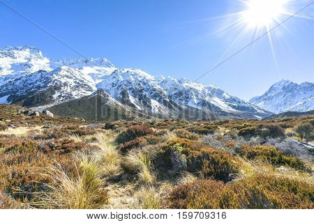 Dry Weed Grass at Aoraki Mount Cook National Park Canterbury region South Island New Zealand.