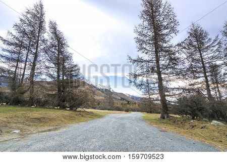 Fine trees at street at glentenner campsite New Zealand