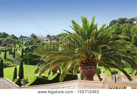 HAIFA ISRAEL - CIRCA SEP 2016: A giant palm tree in Bahai garden