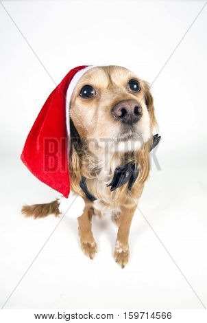 cocker puppy dog with a santa hat and a christmas decoration