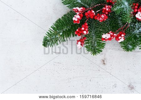 green and white christmas - twig with red berries and green evergreen tree twig with copy space