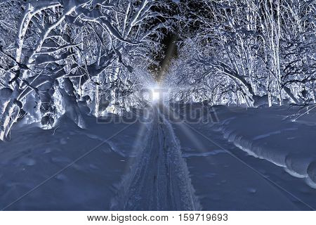 Snow-covered trees bowed under the weight of snow