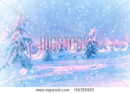 Snowstorm in the winter forest. Falling snow