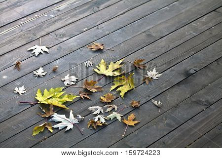 Autumn leaves on the old wooden floor.