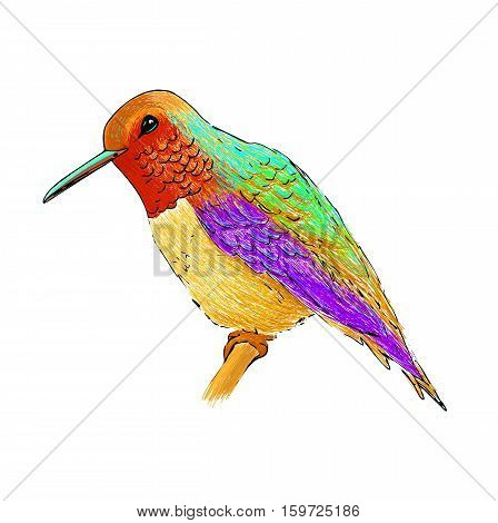 Hummingbird with colorful glossy plumage. Modern pop art style. Colourful bird, white background. Vector illustration of colibri for greeting card, invitation, print, web project. Bright and vivid colors.