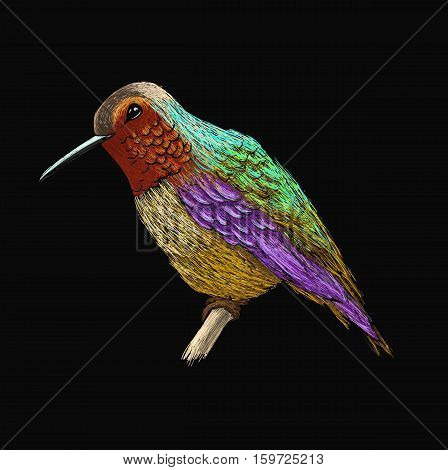 Hummingbird with colourful glossy plumage. Colorful bird illustration on black background. Vector drawing of colibri for greeting cards, invitations, prints, web projects. Bright and vivid colors.