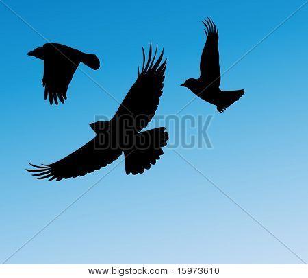 birds in flight two vector