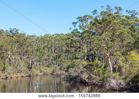A kayaker paddles through indigenous forest on the Denmark River which flows through the town of Denmark in Western Australia.