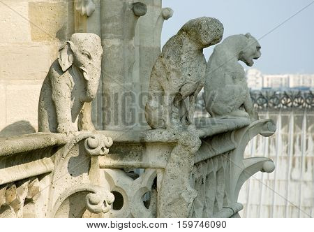 Close-up of gargoyles on the top of Notre-Dame de Paris